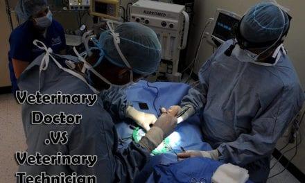Veterinary Doctor VS. Veterinary Technician