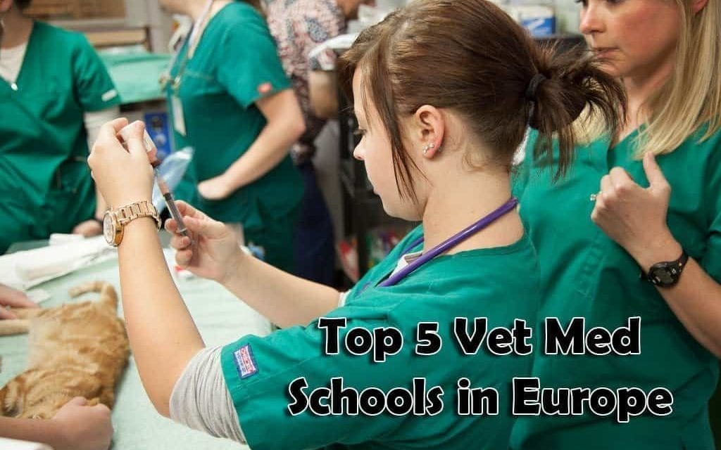 Top 5 Vet Med Schools in Europe