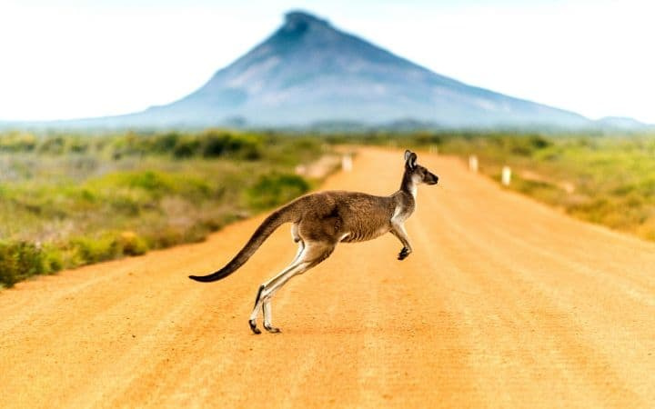 australia animal I Love Veterinary