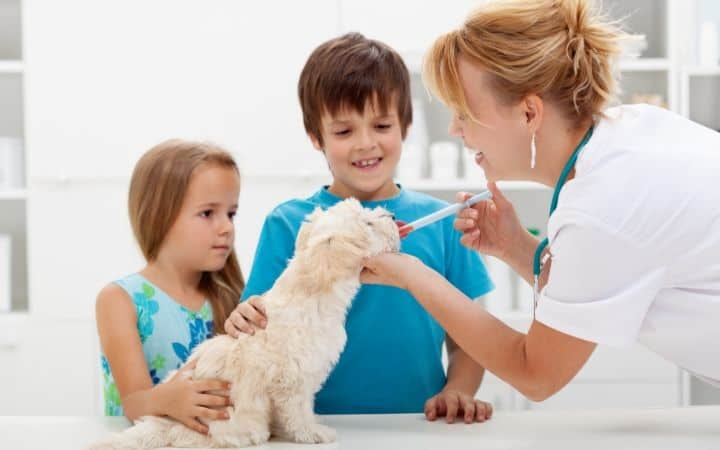 Veterinarian giving medicine to a dog and two kids I Love Veterinary