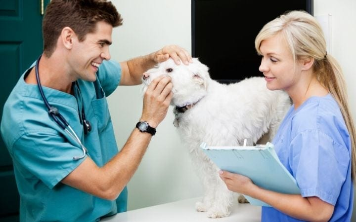 vet tech and vet examining a dog, I Love Veterinary
