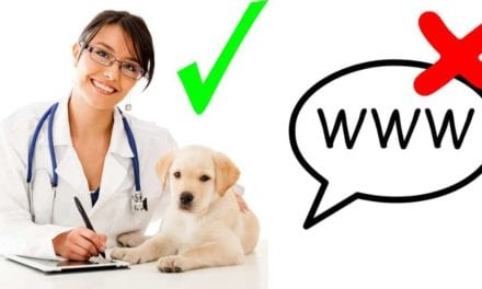 Why you should first consult your Vet and not the internet