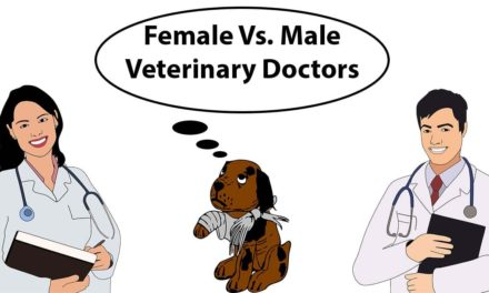 Female Vs. Male Veterinary Doctors