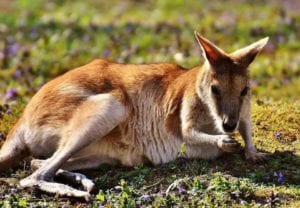 Australia Veterinary