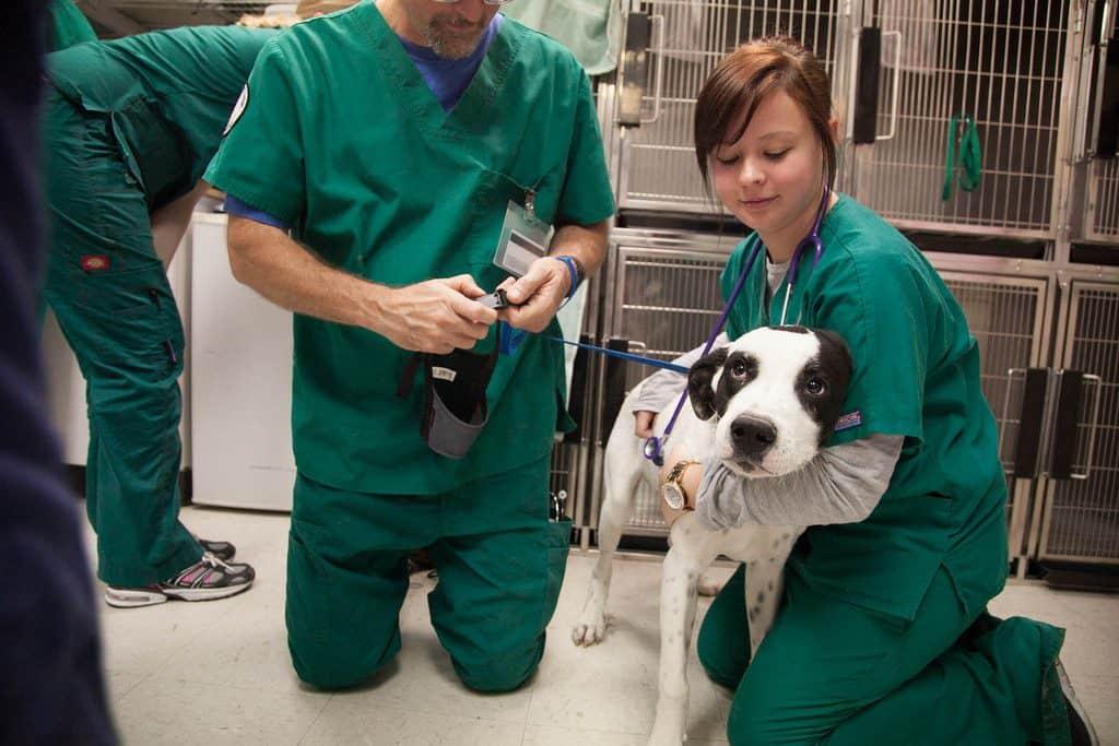 Vet tech, veterinary technician, dog, veterinary medicine, clinic, vet clinic, being a Vet Tech