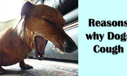 Reasons for dog cough