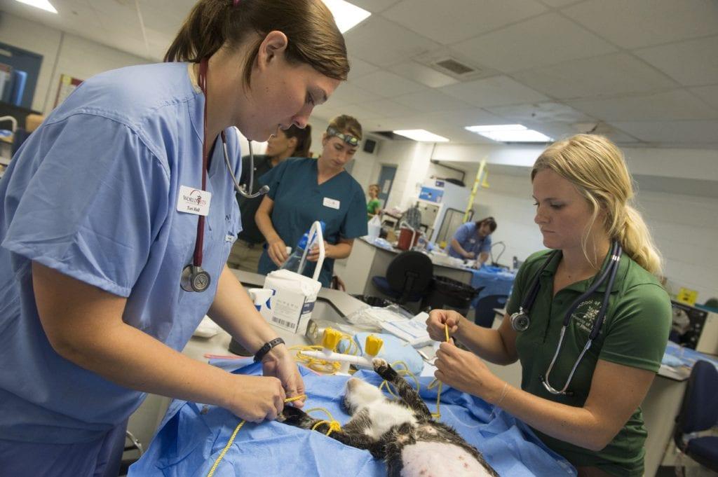 Veterinary technician, vet tech, veterinary medicine, vet clinic, being a Vet Tech