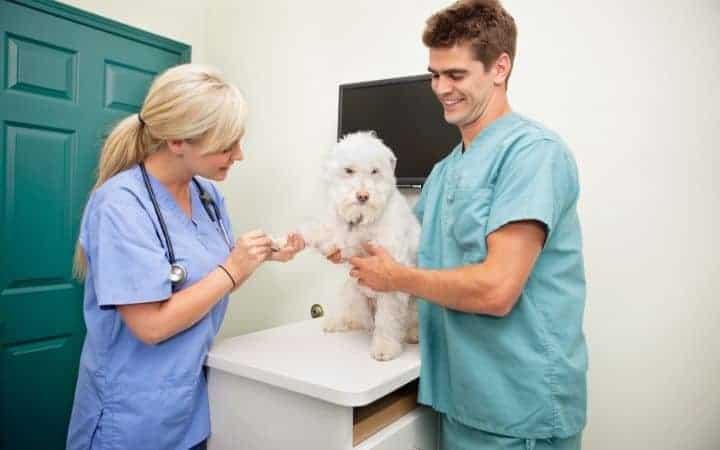 veterinary assistant holding a dog I Love Veterinary