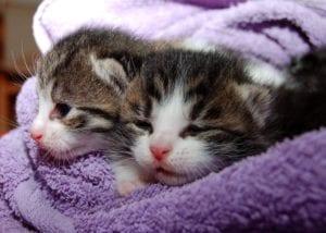 cat vaccine schedule vaccine schedule for cats