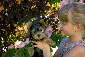 child girl blond dog yorkshire terrier