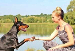doberman girl paws shake lake, Why do dogs lick and chew their paws?