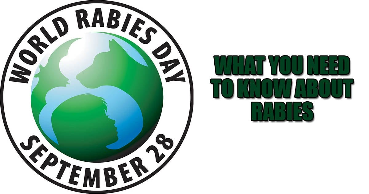 What you need to know about Rabies