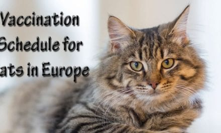 Vaccination Schedule for Cats in Europe