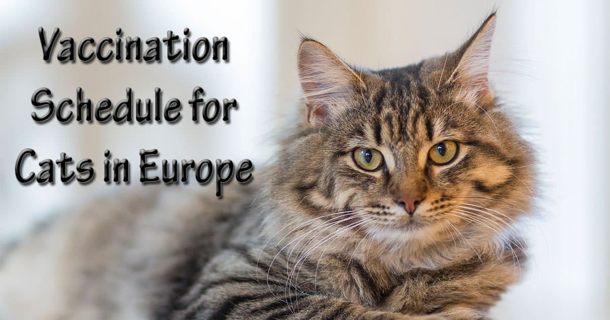 cat vaccine schedule vaccine schedule for cats