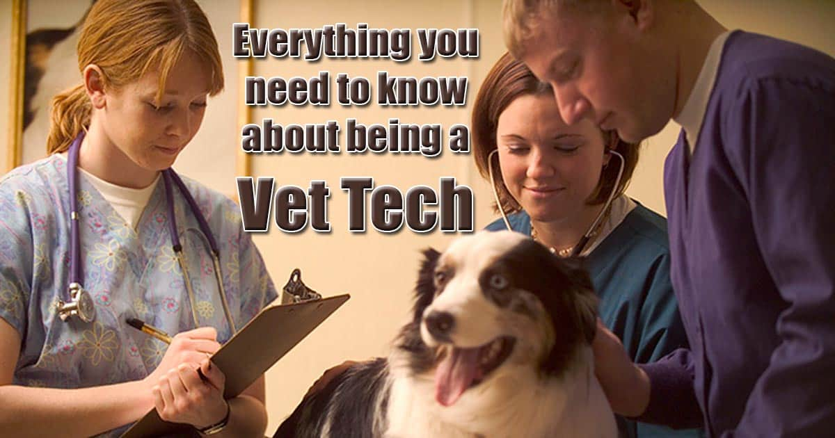 Everything you need to know about being a vet tech veterinary technician