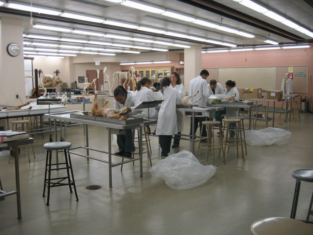 Vet Student Anatomy Lab 2005 09 22 I Love Veterinary - Blog for Veterinarians, Vet Techs, Students