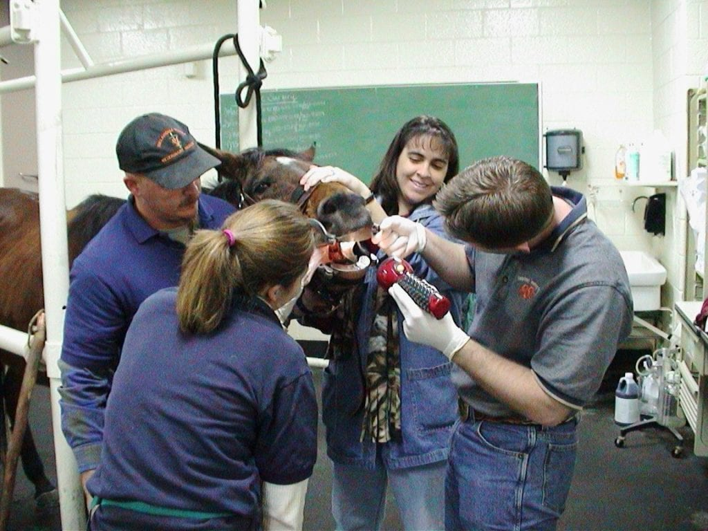 vet students dental practice horse