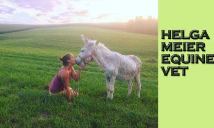 Helga Meier – Equine Vet