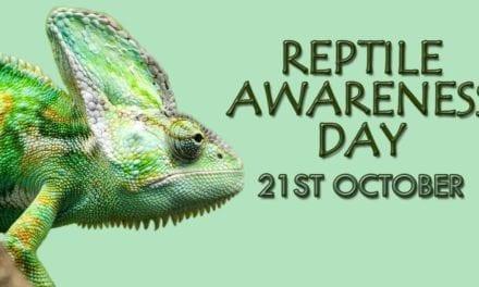 Reptile Awareness Day- 21st October