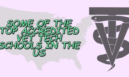 Some of the Top Accredited Vet Tech Schools in the US