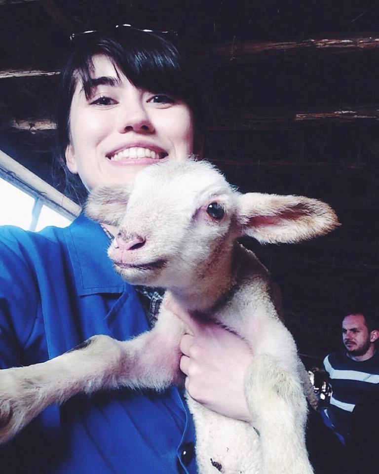 lamb vet