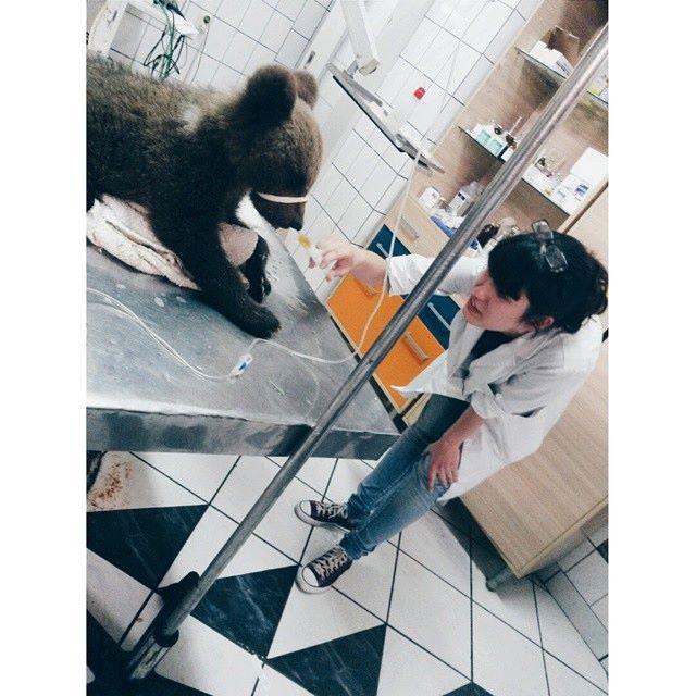vet clinic bear