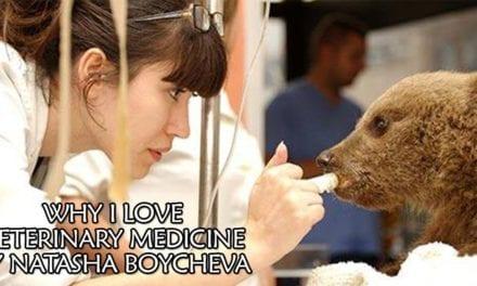 Why I Love Veterinary Medicine- By Natasha Boycheva