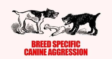 Breed Specific Canine Aggression