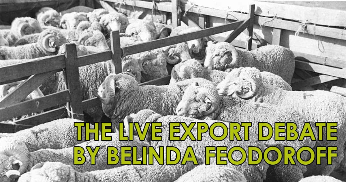 The Live Export Debate by Belinda Feodoroff