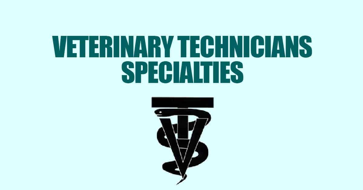 Veterinary Technician Specialties I Love Veterinary