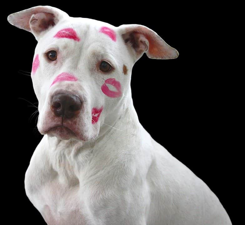 dog with lipstick