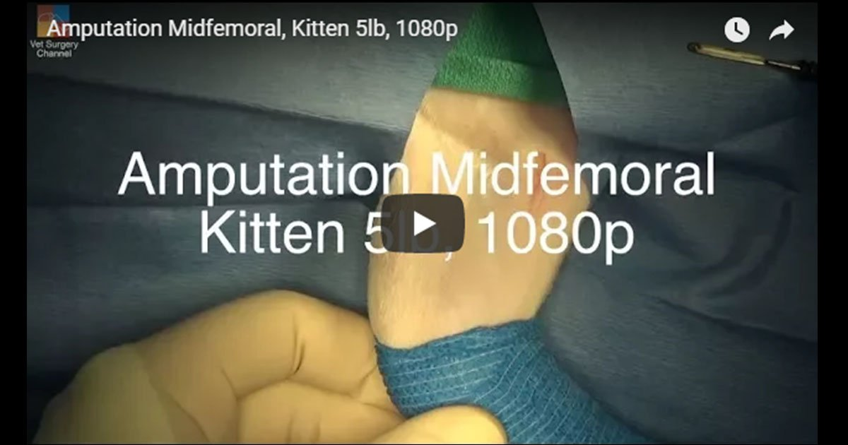 Amputation Midfemoral Video by Vet Surgery Channel
