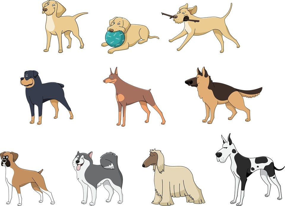 picture of different types of large dog breeds
