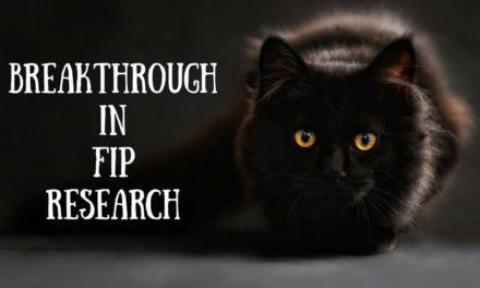 Breakthrough in FIP research