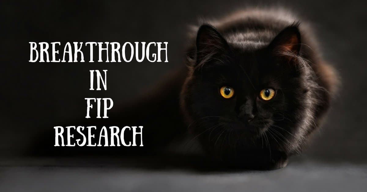 Breakthrough in FIP research