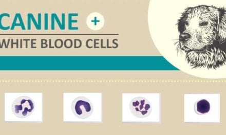 White Blood Cells- Canine
