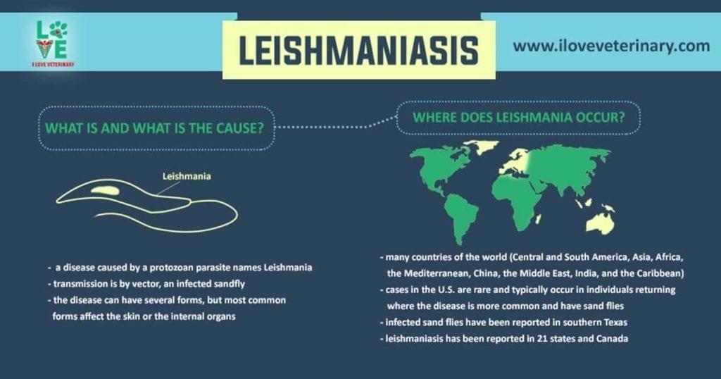 leishmaniasis parasite infographic