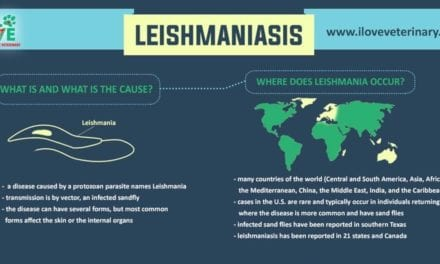 Leishmaniasis – All You Need To Know