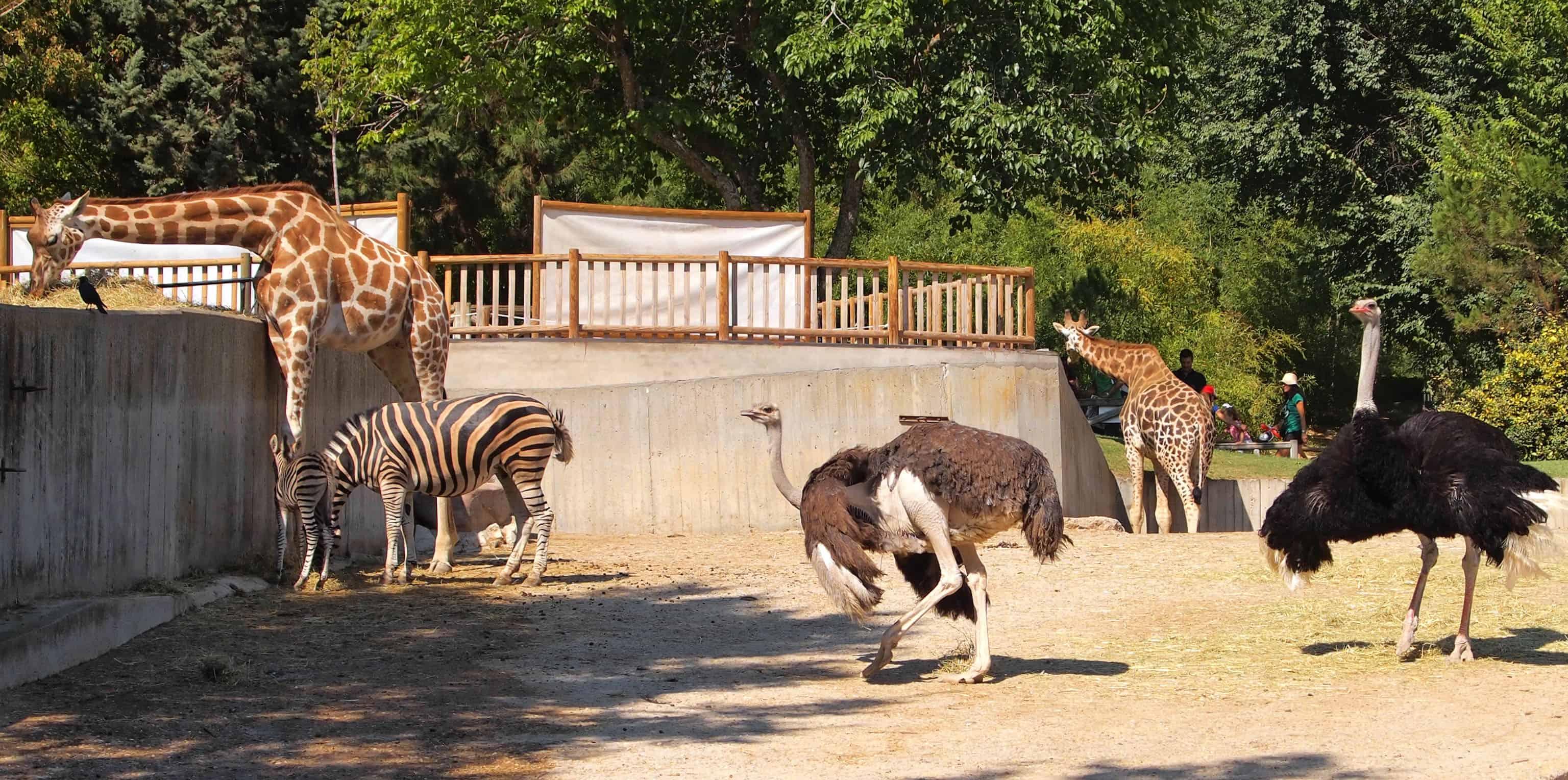 giraffe, zebra, ostrich