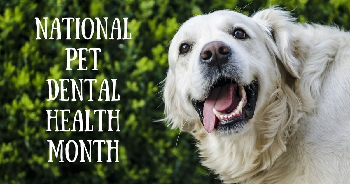 National Pet Dental Health Month – February 2019