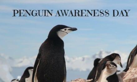 Penguin Awareness Day – January 20th