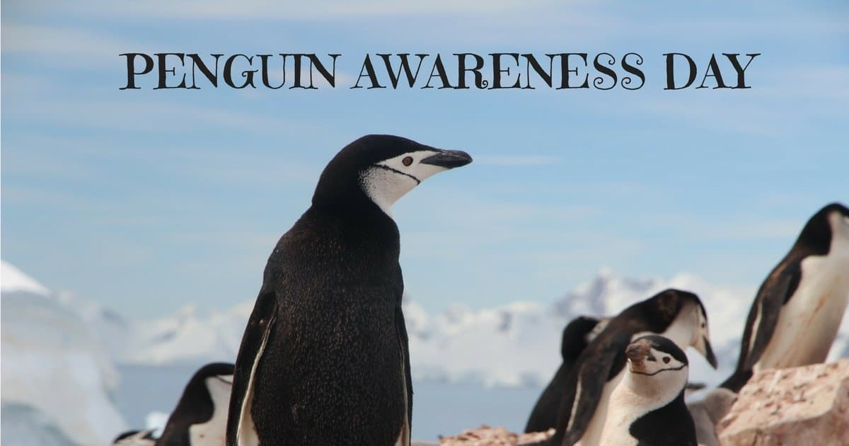 National penguin day january 20 2018