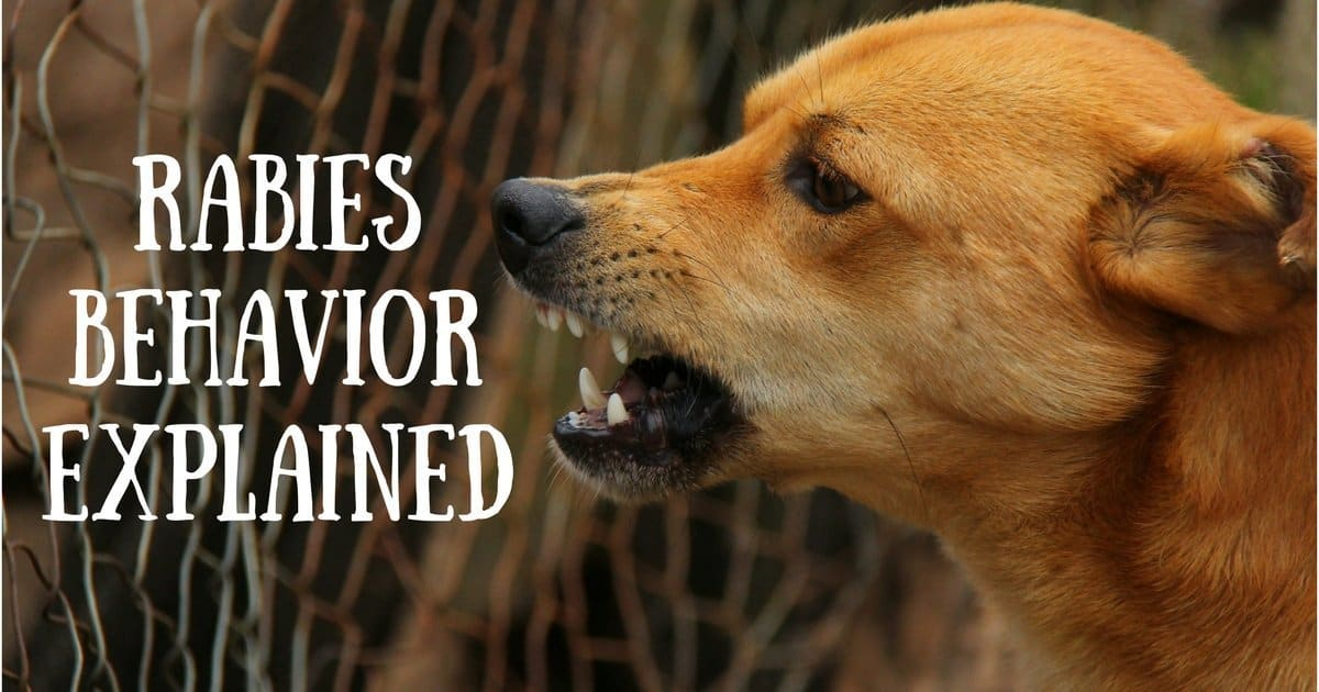 Rabies behavior explained