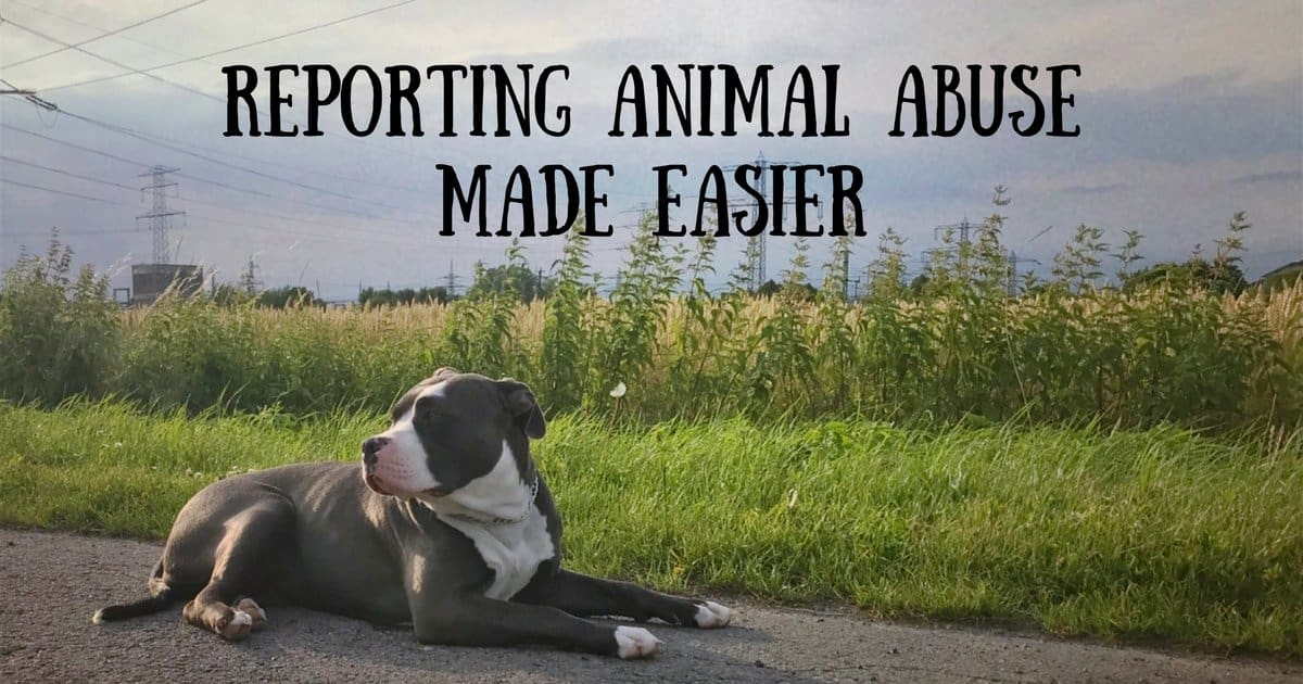 Reporting animal abuse made easier