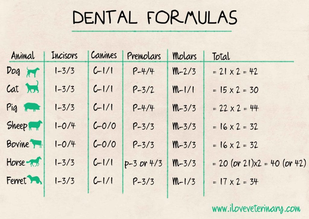 teeth, animals, dental formulas