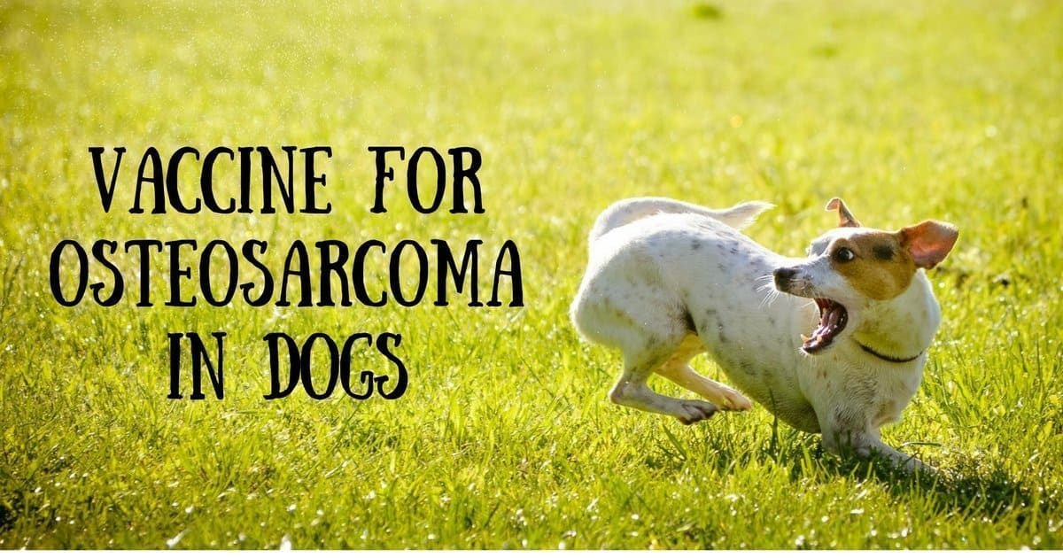 Osteosarcoma Pictures Dogs