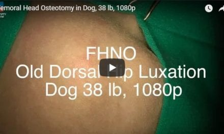 Femoral Head Osteotomy in Dog, 38 lb Video by Vet Surgery Channel