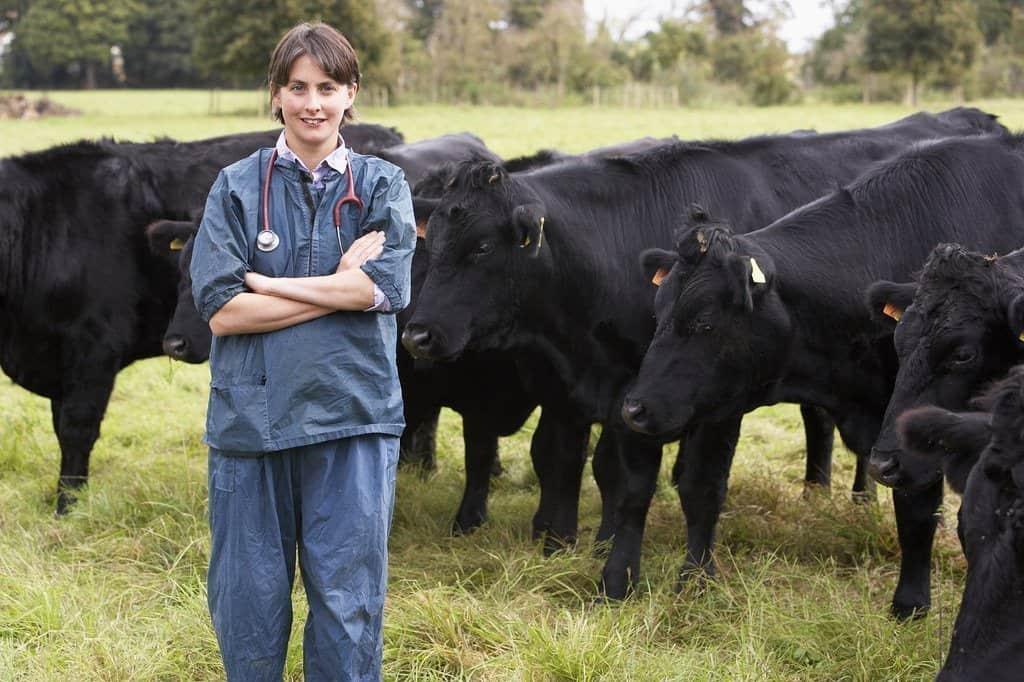 cows veterinarian