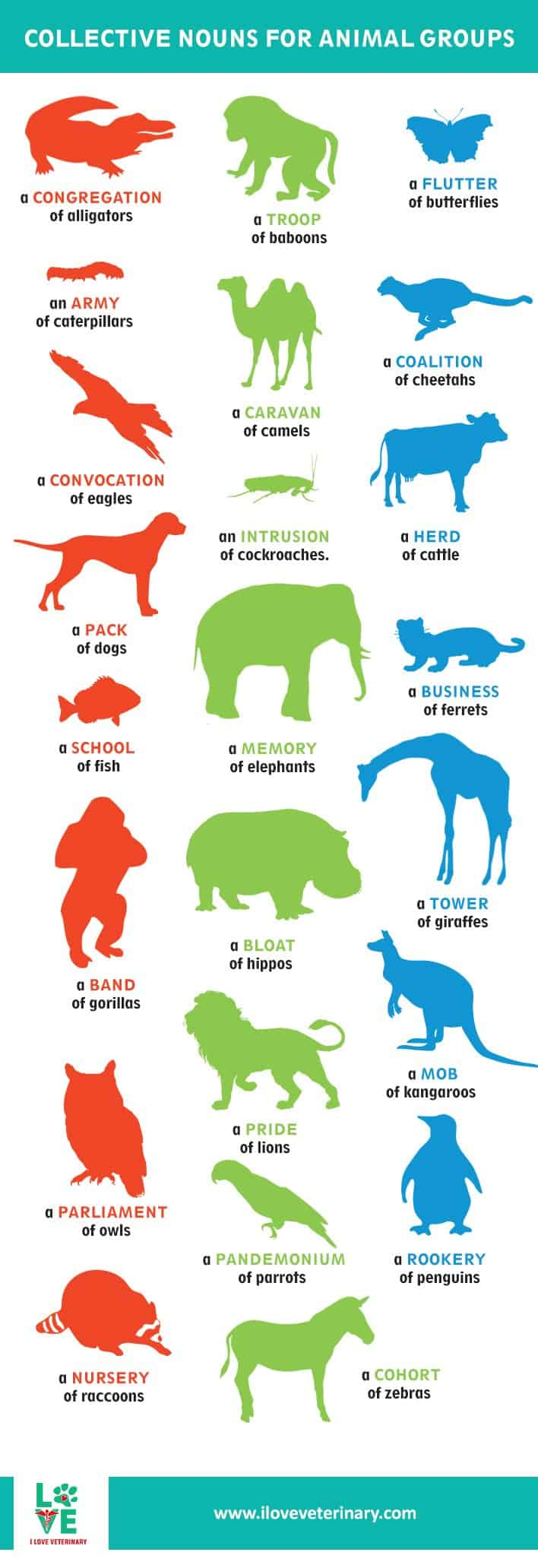i love veterinary infographic animals