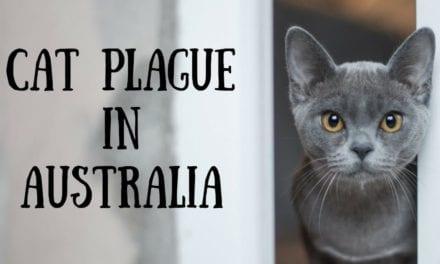 Cat plague in Australia